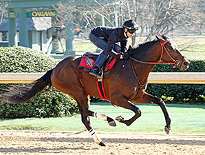 Virginia-bred American Dubai will face 13 other 3 year olds in Saturday's Grade II Rebel Stakes at Oaklawn. Photo courtesy of Coady Photography.