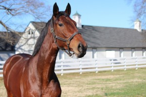 Groundshaker, the last horse bred and raced by Penny Chenery, will be special guest of honor at the upcoming Virginia Horse Festival