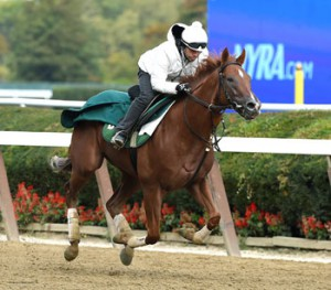 Homespun Hero, trained by Barclay Tagg, has won 2 straight races.