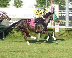 Titan Alexander wins at Mountaineer Park (Coady Photography)