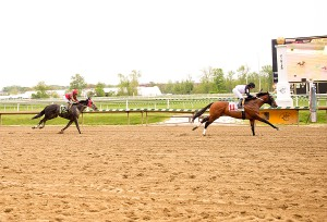 Tracy's Turn, bred by Larry Johnson, wins by three lengths at Laurel. Photo by Jim McCue.