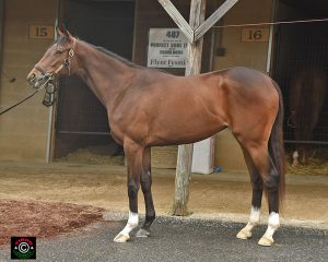 #226 is a Virginia-bred filly by Flower Alley out of Sketch Book by Stormy Atlantic