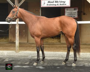 #503 is a Virginia-bred colt by Discreetly Mine out of Enterprise Beach by El Prado (IRE)