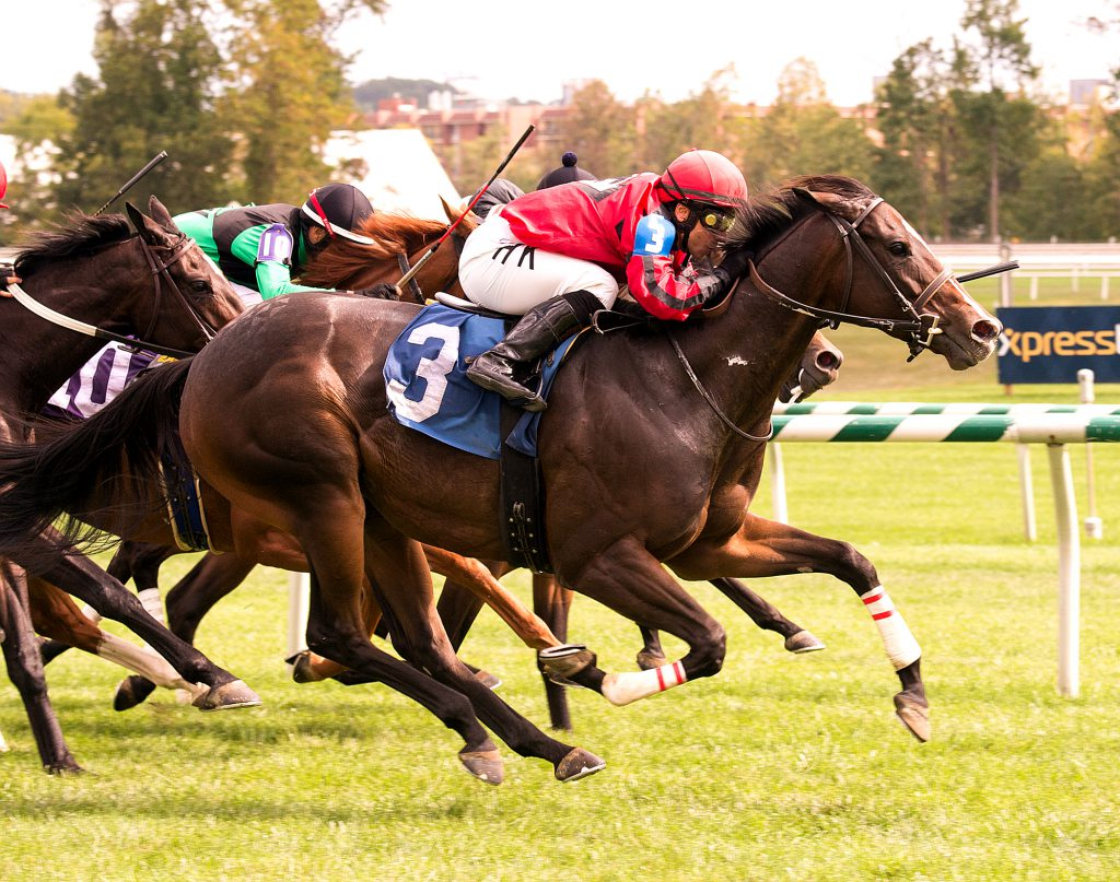 Complete St. is one of three Virginia-breds to compete in Saturday's Maryland Million card. Photo by Jim McCue