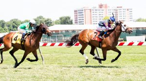 Rose Brier wins the Edward P. Evans Stakes at Pimlico on Saturday. Photo by Jim McCue.