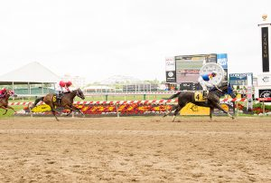 Royal Caviar's 3 1/4 length win at Pimlico June 5th was his 3rd from 6 starts this year. Photo by Jim McCue.