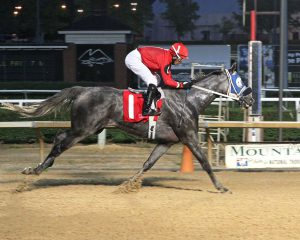 Explore won his claiming race at Mountaineer August 10th by 11 1/4 lengths! Photo by Coady Photography.