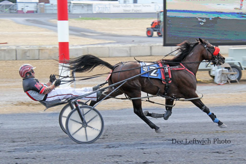 B Blissful won his fifth straight race in Saturday's ninth race at Shenandoah Downs. Jimmy Viars trains the classy 12 year old. Photo by Dee Leftwich.