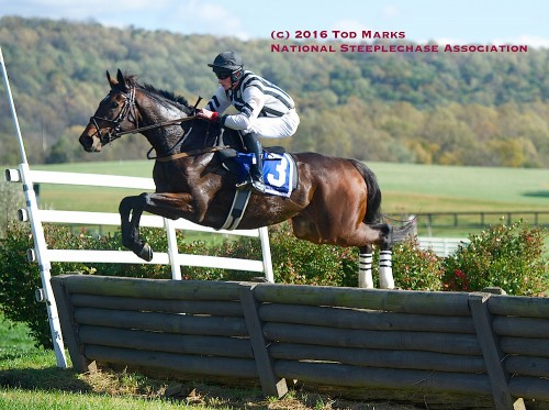 Grand Manan won the 2016 International Gold Cup October 22nd at Great Meadow. Photo by Tod Marks, from NSA website