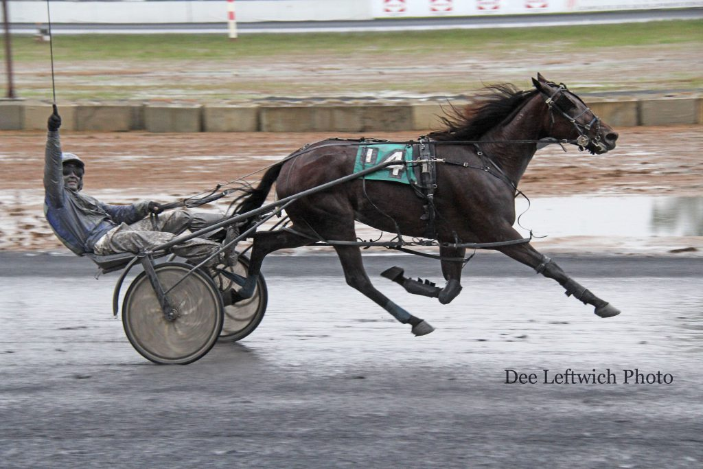 With his whip skyward, leading driver Tyler Shehan leads Whiskery to victory in Saturday's finale. Photo by Dee Leftwich.