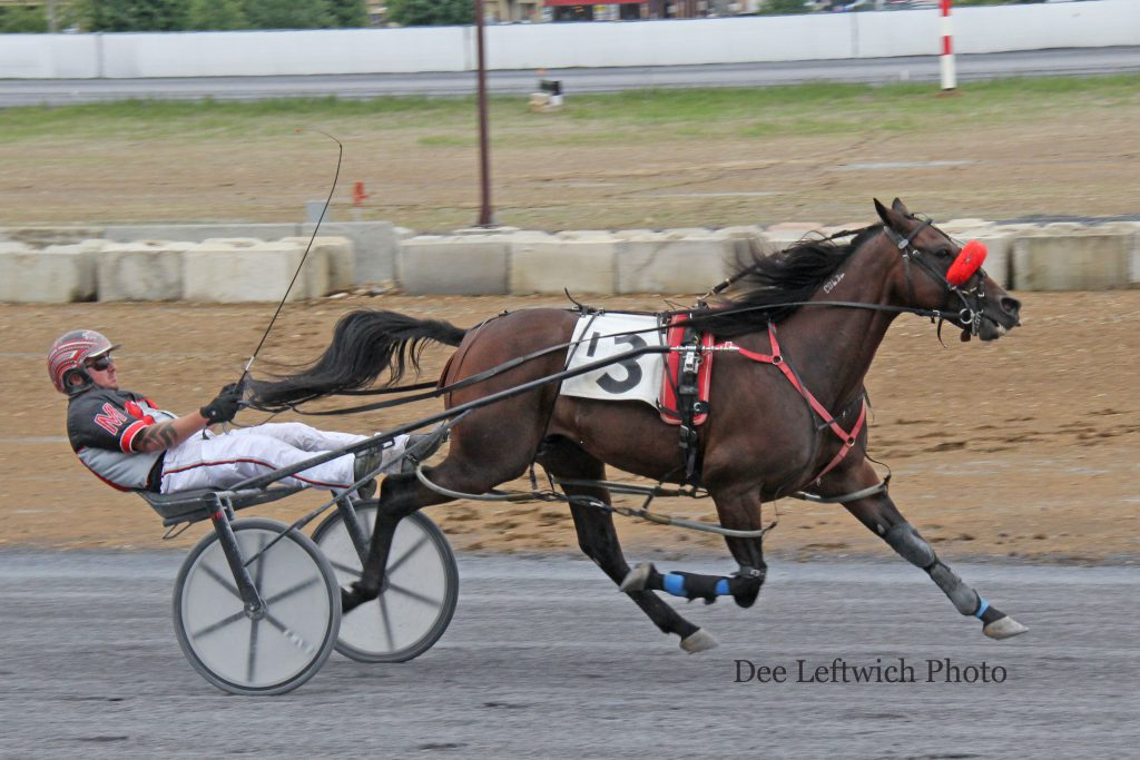 Frank Milby directs B Blissful to his 6th straight win at Woodstock Sunday Oct. 2. Two if the wins came at the Fair meet and 4 during the current fall session. Photo by Dee Leftwich.