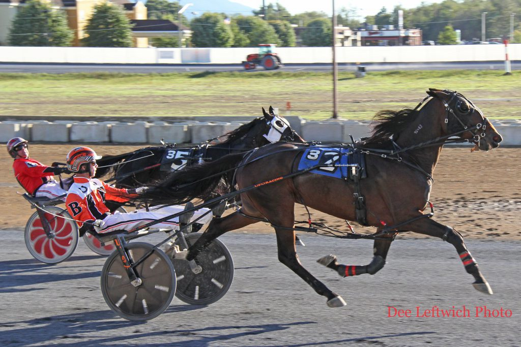 Last Chance Harvey won the meet's final race on October 9th. The Co-Horse of the Meet had 4 victories ands a second place finish. Photo by Dee Leftwich.