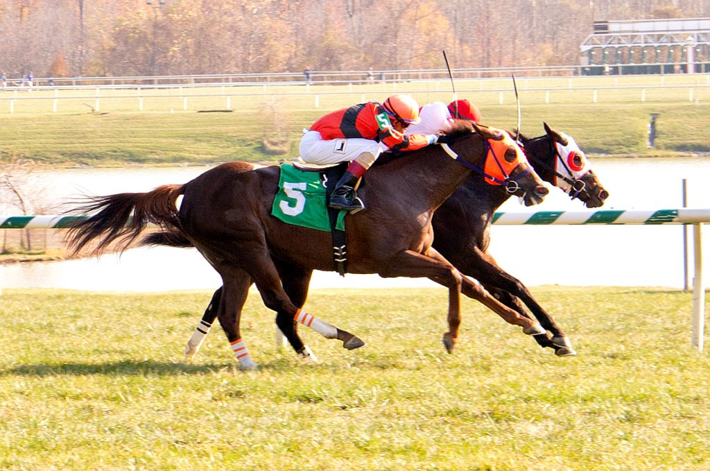 Awake The Day, sent off at 42-1, upset the field and paid $87.60 to win November 19th at Laurel. Photo by Jim McCue.