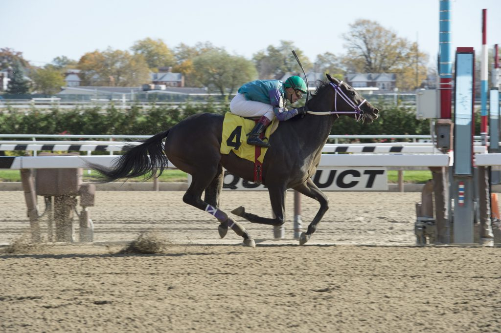 Chorus Line won by eight lengths in a $58,000 starter race November 4th at Aqueduct. Photo  by Adam Coglianese.