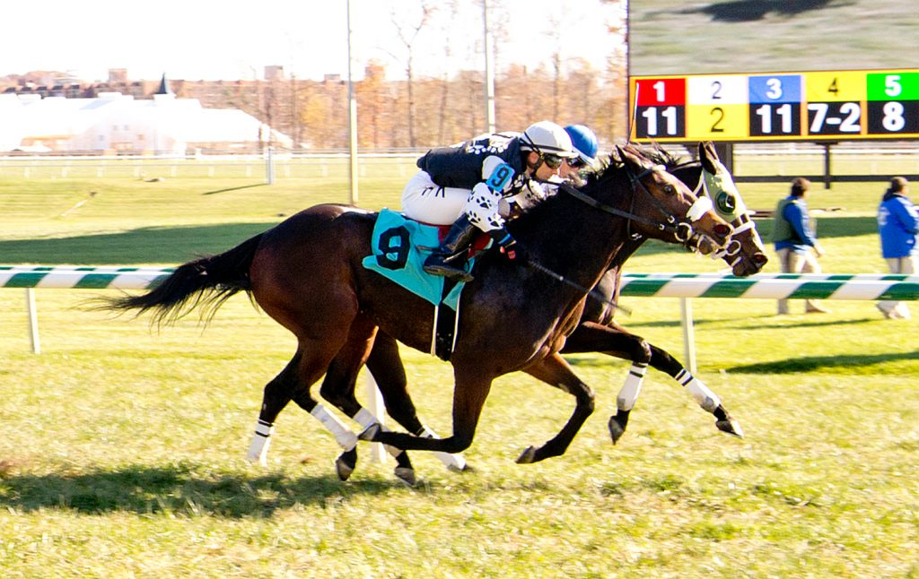 4 year old filly My Vixen had a gate to wire win November 13th at Laurel to break her maiden. Photo by Jim McCue.