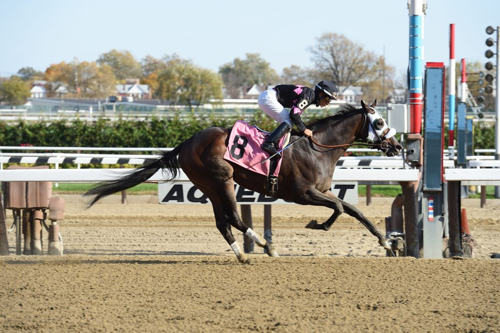 Realm, co-owned by Barclay Tagg, captured a $67,000 allowance race at Aqueduct November 5th. Photo by Adam Coglianese.