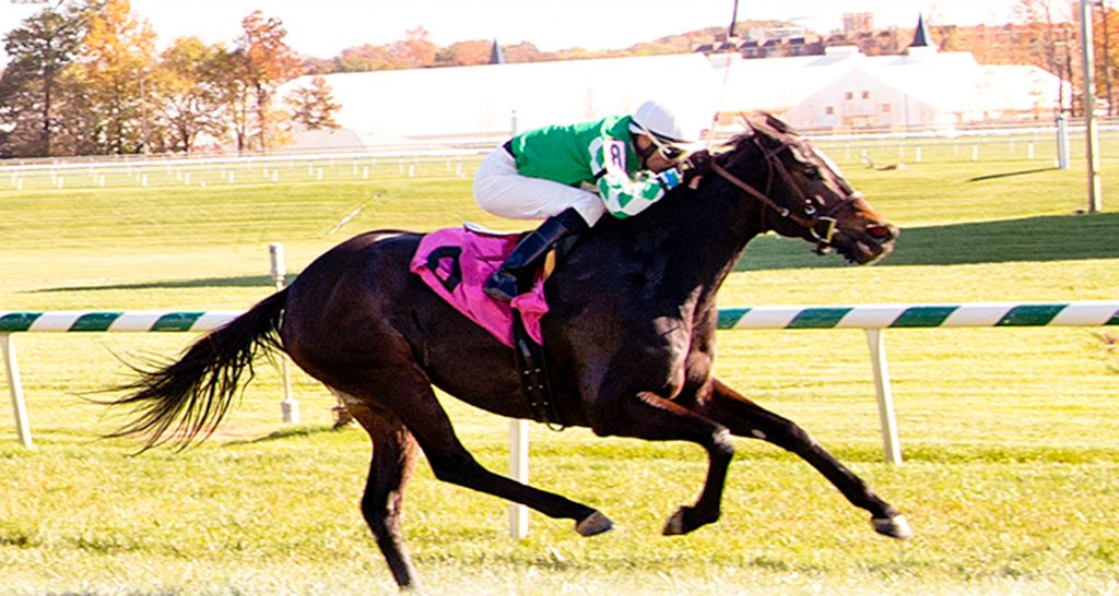 Northern Eclipse, winner at Laurel November 4th, was claimed for $16,000. Photo by Jim McCue.