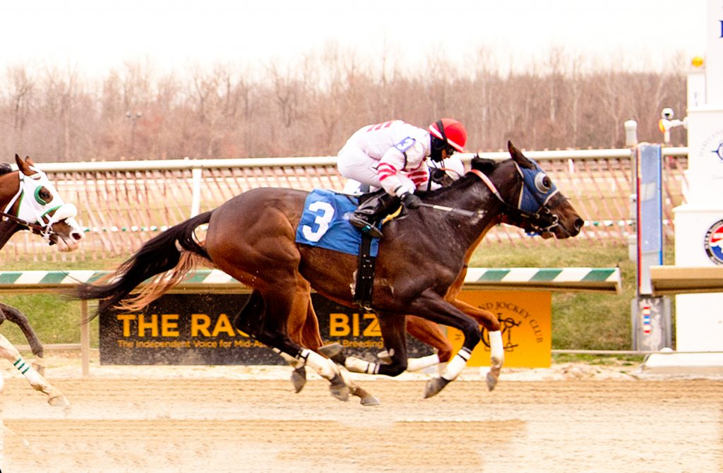 3 year old gelding Bourbon and Beer broke his maiden December 16th at Laurel Park. Photo by Jim McCue./