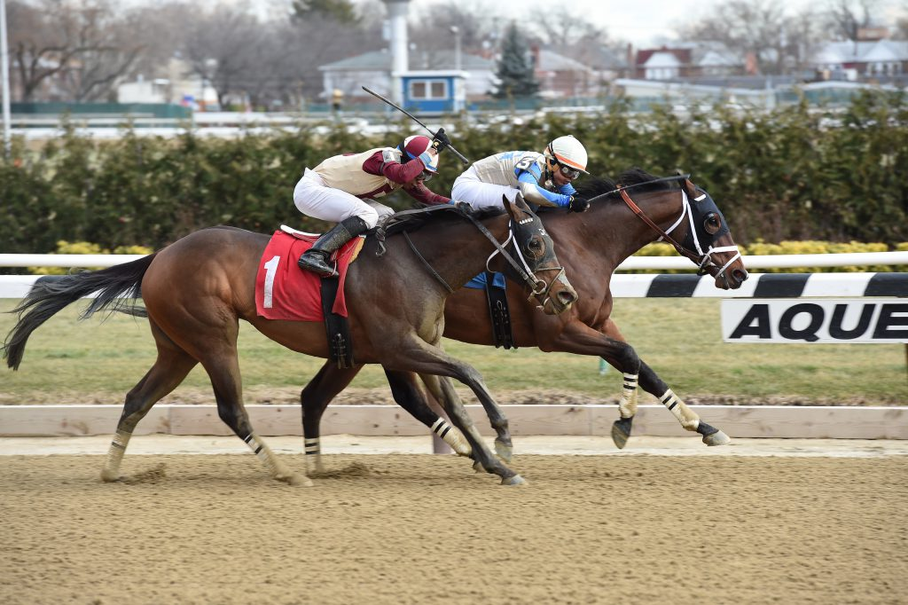 River Date went gate to wire December 30th at Aqueduct in a $58.000 starter race. Photo by Adam Coglianese.