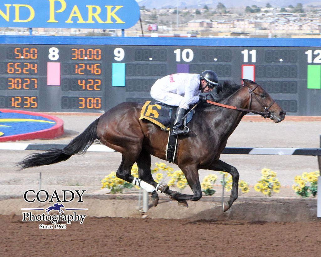 American Dubai, a Derby trail contender in 2016, collected his first win as a 4 year old Feb. 14 at Sunland. Photo courtesy of Coady Photography.