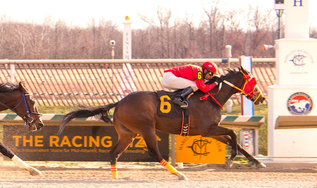Greek God pushed his bankroll to $142,445 with a win at Laurel Jan. 28. Photo by Jim McCue.