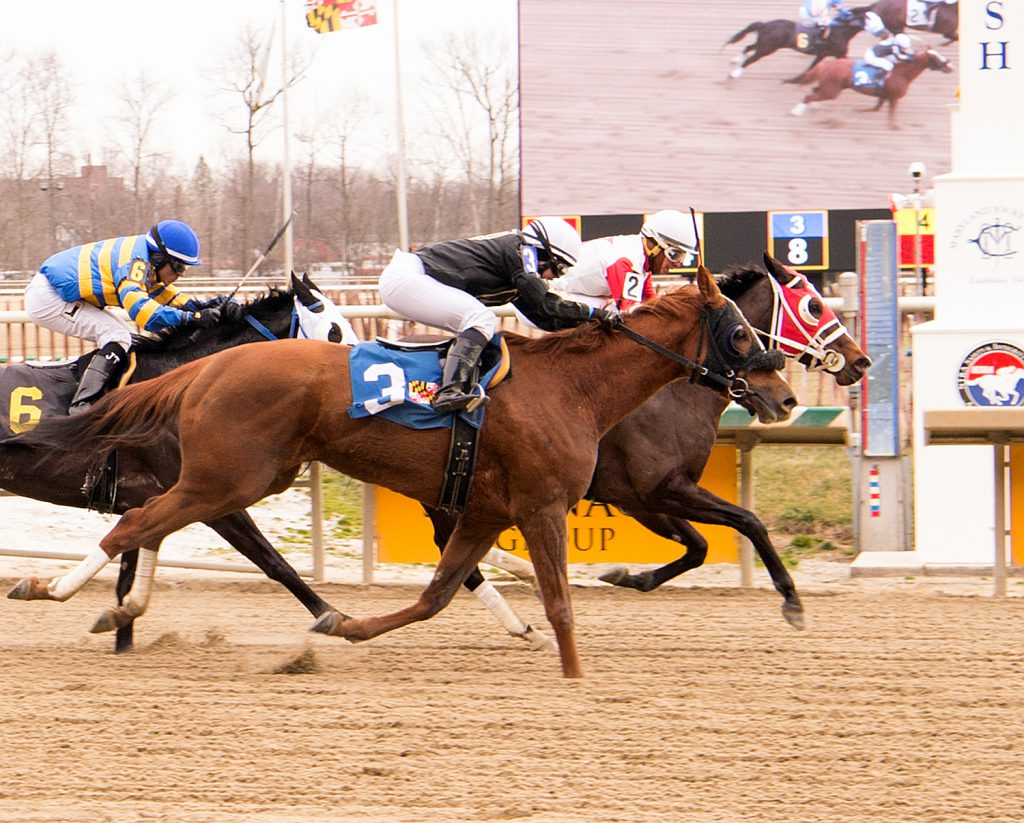 Pardontori'sfrench (outside) just missed at Laurel Park on Super Bowl Sunday. Photo by Jim McCue.
