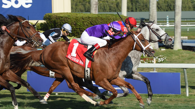 Virginia-bred Long On Value finished third in the $125,000 Gulfstream Park Turf Sprint Stakes Jan. 28. Photo courtesy of Coglianese Photography.