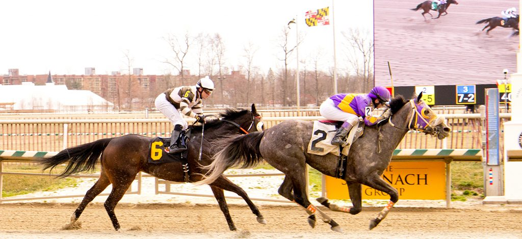 Street Miz, bred by Larry Johnson, was victorious Feb. 25 at Laurel Park. Photo by Jim McCue.