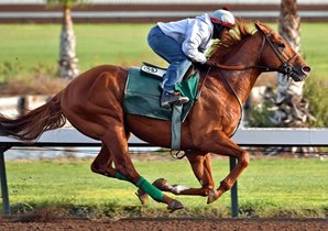 Dortmund, now trained by Art Sherman, will try turf in the Grade I Frank Kilroe Mile March 11 at Santa Anita. Photo by Gary Tasich.